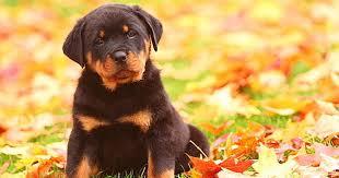 7 Home Remedies For Dog Dandruff - Care.com