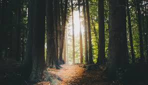 Jésus-Christ est le chemin à suivre | FoienChrist.org