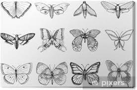 Obraz Tetování Nebo Boho Tričko Nebo Scrapbooking Design Mystický Esoterický Symbol Svobody A Cestování Motýl Nebo Skica Hmyzu Entomologické