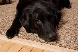 Small Picture Best Carpet For Pets Carpet Vidalondon