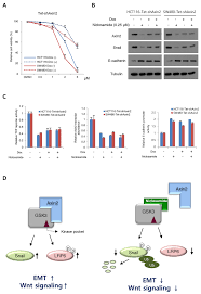 On-target effects of niclosamide in colon cancer cells. (A) Cell...