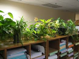 office cubicle plants. Winsome Office Decor Plants Modern Cubicles Furniture Cubicle