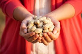 The cure for peanut allergy may have been found