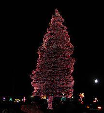 Swan Lake Sumter Sc Christmas Lights Fantasy Of Lights Swan Lake Sumter Sc