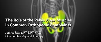 pelvic floor muscles in mon orthopedic plaints