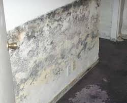 House Mold  Household Mold In Basement Is A Significant ProblemMold In Basement