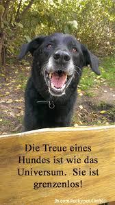 Die Treue Eines Hundes Ist Wie Das Universum Sie Ist Grenzenlos