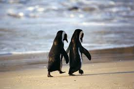 cute penguins in love. Contemporary Love Penguins In Love And Cute