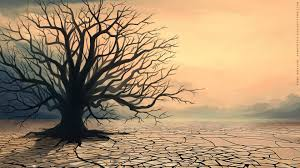 Image result for barren tree images