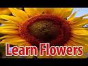 essay on flowers in kannada language