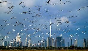 الإمارات تسمح للمطعمين من كافة الدول بالحصول على تأشيرات سياحية - فرانس 24