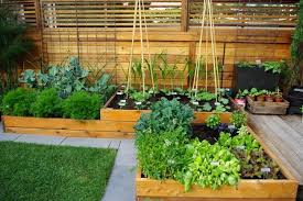 Small Picture Backyard Vegetable Garden Design Gardening Ideas
