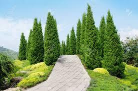 pine tree garden blue sky stock photo 57448816