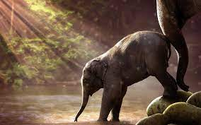 Animal Cute Baby Elephant Empower To ...
