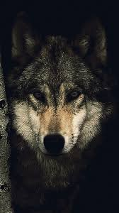Epic Wolf Wallpaper 1080p » Hupages ...