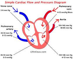 Blood Pressure Diagram Untitled Document
