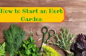 how to grow your own herbs for cooking