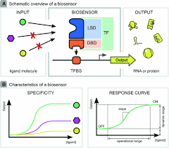 tailor made transcriptional biosensors for optimizing microbial cell  at Rtao 16710c As Range Selector Wiring Diagram