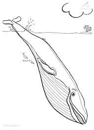 Whale 66 Animals Printable Coloring Pages
