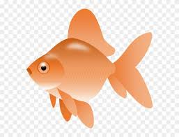 gold fish clip art. Modren Clip Smartness Gold Fish Clip Art Image Of Goldfish Clipart  Png  Transparent To