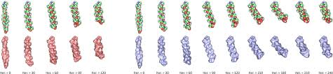 Protofold II: Enhanced Model and Implementation for Kinetostatic Protein  Folding | DeepAI