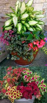 What To Plant In The Shade  SunsetContainer Garden Shade Plants