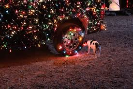 Animals In Christmas Lights Short Coated White And Black Dog Dog Car Christmas Lights