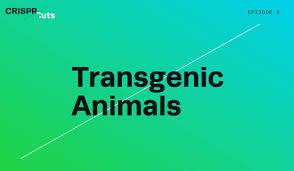 Transgenic Animals Crispr Edited Transgenic Animals