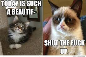 Grumpy Cat Memes | WeKnowMemes via Relatably.com
