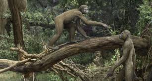 Ancient hominid used unusual hips to combine walking and climbing | Science  News