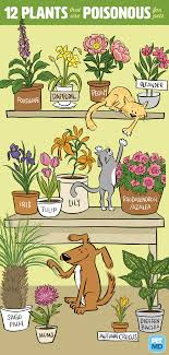 12 poisonous plants for dogs and cats