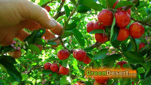 Best 25 Tree Care Ideas On Pinterest  Apple Tree Care Pear How Often Should I Water My Fruit Trees