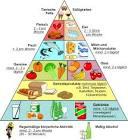 fett abnehmen ernährung