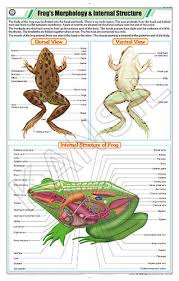 Frogs Morphology Internal Structure For Zoology Chart