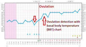 Sample Bbt Chart Showing Ovulation Determining Ovulation By Basal Body Temperature Works