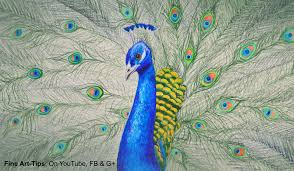 Drawingcolor How To Draw A Peacock With Color Pencils Drawing Feathers And