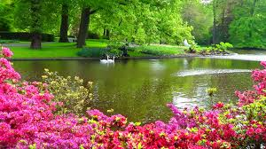 flowers garden. Download Beautiful Nature Flowers Garden Mojmalnews Com