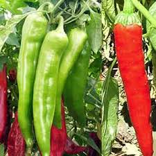 The Big List Of Hot Peppers Cayenne Diane