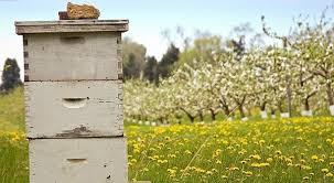 Αποτέλεσμα εικόνας για μελισσοκομια