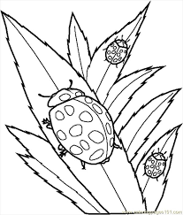 Small Picture Free Bug And Insect Coloring Pages Clip Art Library