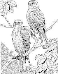 Small Picture 310 best Coloring pages images on Pinterest Drawings Coloring