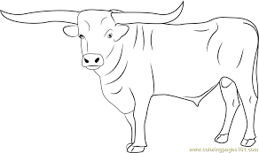 Small Picture Bull Coloring Page Free Bull Coloring Pages ColoringPages101com