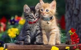 cute cat wallpaper backgrounds. Perfect Wallpaper HD Wallpaper  Background Image ID383280 On Cute Cat Backgrounds L