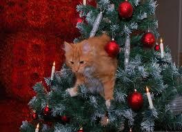 Bildergebnis für weihnachtsbaum und katzen