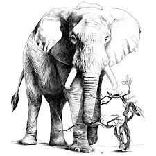 Olifant Tekening Vectoren Illustraties En Clipart 123rf