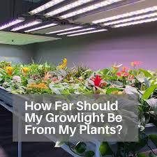 Led Light Distance Chart How Far Should Led Grow Lights Be From Plants Grow Light