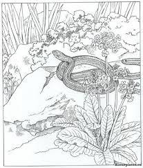 Natuur Kleurplaat Animal Coloring Pinterest Nature Coloring Pictures