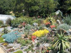 Small Picture southafricangardens view in the restored 1965 succulent garden