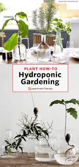 Hydroponic Kitchen Herb Garden 17 Best Ideas About Hydroponic Herb Garden On Pinterest