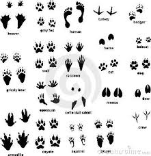 Wild Animal Footprints Animal Tracks With Front And Rear